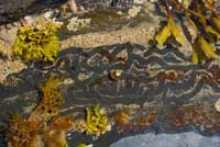 Trails in rockpools